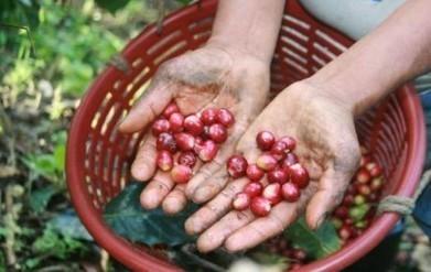 Esclavitud infantil con olor a café en fincas chiapanecas | Esclavitud infantil | Scoop.it