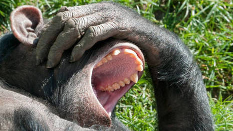 Video: ScienceTake: The Contagious Yawn -  It may have to do with empathy | Mills Termite & Pest Control | Scoop.it