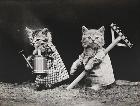 Victorian photographer pioneered Lolcats a century ago   Best Cat meme   Scoop.it