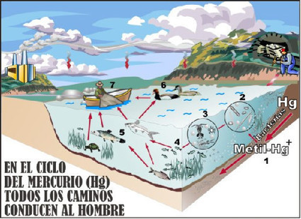 México no sabe qué hacer con el mercurio   Canal Azul 24   Tourism in veracruz   Scoop.it