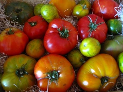 Hâte de tomate | Gastronomie et alimentation pour la santé | Scoop.it