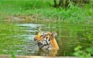 Forest department tries to explain away missing tigers - The Times of India | The Wild Planet | Scoop.it