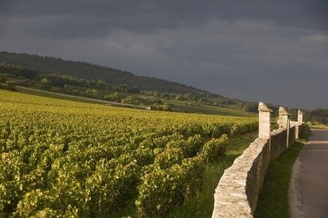 6 domaines et pas des moindres (DRC, Lafon, Leflaive...) ont décidé de joindre leurs maigres récoltes pour produire deux pièces de Montrachet. | Gastronomy & Wines | Scoop.it
