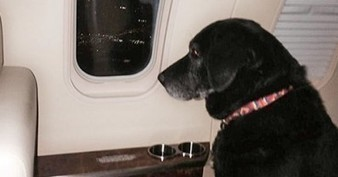 This old dog flew to heaven — in a private jet. | Protect our oceans | Scoop.it