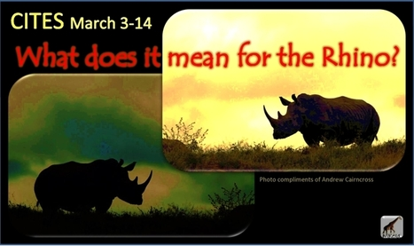 CITES March 3-14: What does it mean for rhino, endangered species? | What's Happening to Africa's Rhino? | Scoop.it