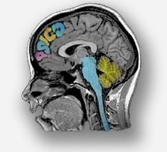 Psicología y neurociencia en español: La enseñanza explícita del manejo de las emociones puede potenciar el desarrollo socio-emocional de niños preescolares | Drogas y el cerebro | Scoop.it