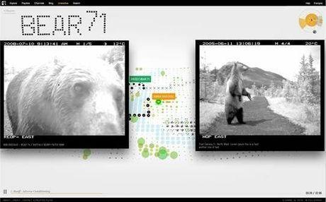 Le web documentaire Bear 71 est le site de l'année du FWA (favorite website awards) | PatWhite.com | Cabinet de curiosités numériques | Scoop.it