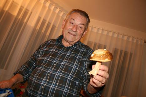 Vendée : la prudence requise pour la cueillette des champignons - Le Courrier Vendéen | Very Important Pleurotes... des bois à chez moi | Scoop.it
