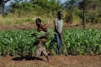 Developing a sustainable economy in Africa through reforestation | Development in Africa | Scoop.it