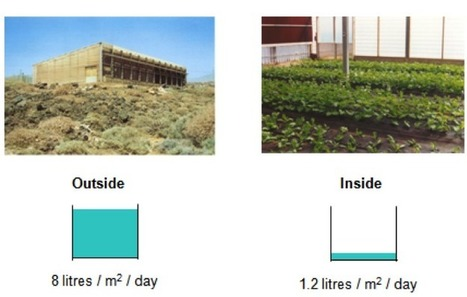 Seawater Greenhouse: A new approach to restorative agriculture | Global Water Forum | The Glory of the Garden | Scoop.it
