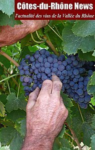 Vendanges : l'art de la dégustation des baies | Vendanges en Vallée du Rhône-Harvest in Rhône Valley | Scoop.it