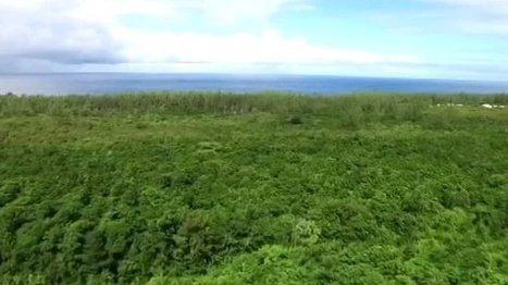 Découverte des forêts réunionnaises en vidéos | Habiter La Réunion | Scoop.it