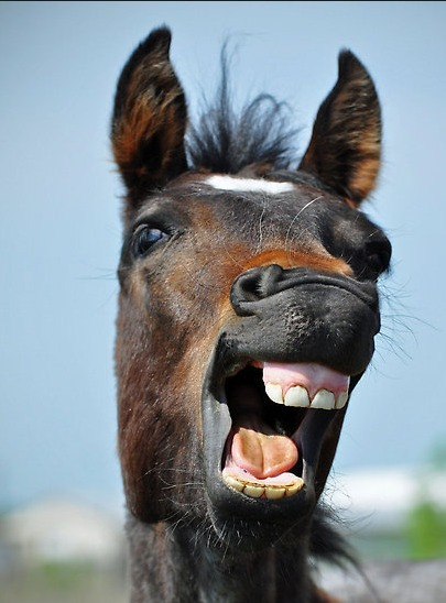 Des centaines de chevaux de laboratoire auraient été écoulés dans des boucheries | 694028 | Scoop.it