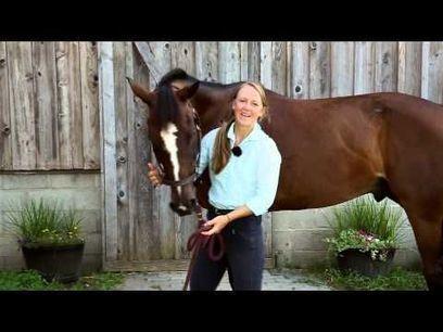 Video | Equine Bodywork | Scoop.it