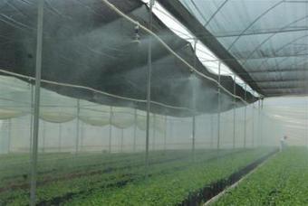 Estimula la Sagarpa agricultura protegida | Editorial El Vigía | Cultivos Hidropónicos | Scoop.it