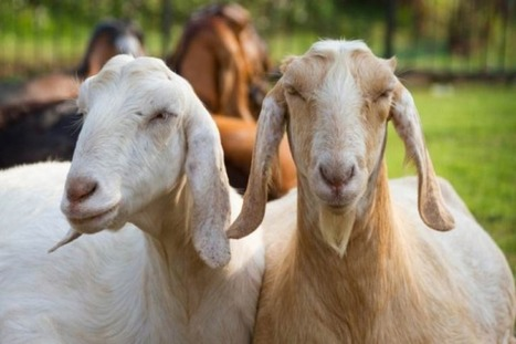 Goats, Cars, and Personalized Medicine | Complex Systems and X-Events | Scoop.it