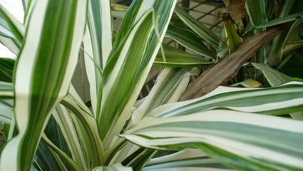 Purificare l'aria in casa: 5 piante d'appartamento utili | l'ambiente | Scoop.it