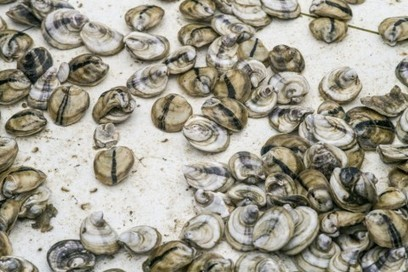 Climate change is really bad news if you like oysters, scallops and clams | Climate Chaos News | Scoop.it