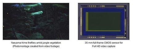 Nuevo sensor de Canon tiene un increíble desempeño en escenas de poquísima iluminación - ALTFoto   ISO102400   Scoop.it
