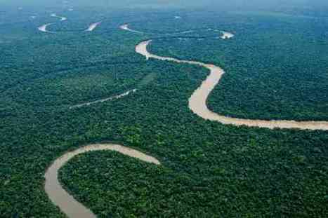 Peru Moves to Protect 'One of the Last Great Intact Forests'   Heritage in Danger   Scoop.it