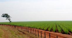 Pesquisa avalia alternativas para segunda geração do bioetanol - Ambiente Energia | Ambiente Energia | Infraestructura Sostenible | Scoop.it