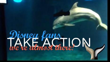 Free the Disney Dolphin  Katie Emmons  Petition b Katie Emmon wells, V T | Wildlife | Scoop.it