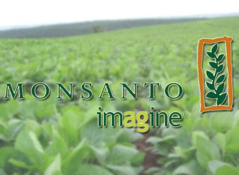 La Justicia analiza un pedido para impedir que Monsanto construya una nueva fábrica | monsanto | Scoop.it