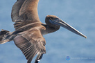 Seabirds Carry Warnings of Ocean Pollution | Sustain Our Earth | Scoop.it