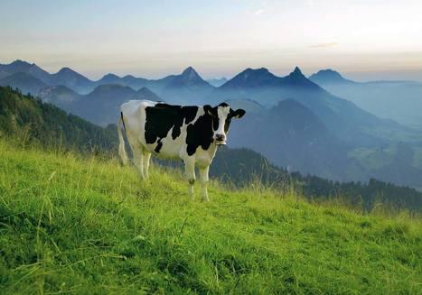 La nouvelle campagne presse des Fromages de Suisse   thevoiceofcheese   Scoop.it
