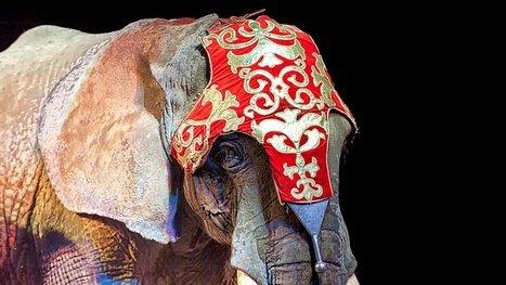 Elles ont interdit les cirques avec animaux sauvages : voici la liste des 42 villes à applaudir ! | Droit | Scoop.it