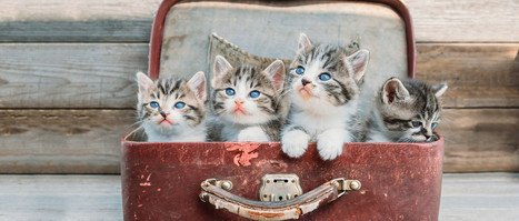 How pictures of kittens can help you manage money (a story by ING eZonomics) | Bounded Rationality and Beyond | Scoop.it