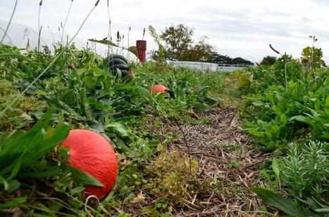 Fermes d'avenir : la permaculture open fourche | Revue | Scoop.it
