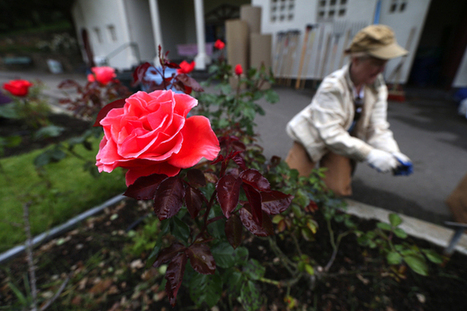 Gardening goes high-tech in Silicon Valley - San Jose Mercury News | LetsMeetAtJoes | Scoop.it