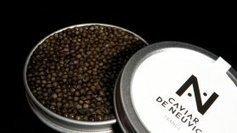 Le caviar de Neuvic, le nouveau or noir du périgord | Agriculture en Dordogne | Scoop.it