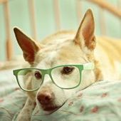 20 Fun Pictures of Cats and Dogs Wearing Glasses | Cats Rule the World | Scoop.it