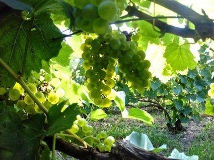Champagne — Paroles de vignerons - Vinparleur - Winzer talk | # Tourisme numérique, #Travel and Tourism, #Environnement,# Eco durabilité, #Oenotourisme, # Interculturalité, #Management interculturel, | Scoop.it