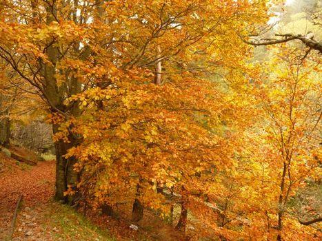 50 000 observateurs pour la forêt, c'est fini à Vigie-Nature ! | Lorraine | Scoop.it