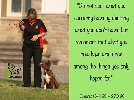 The Two Sides of Dog Training: The Right and the Wrong Way ...   All about Pets   Scoop.it