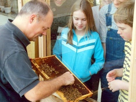 Bees for Kids | School Gardening Resources | Scoop.it