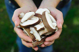 Place Mushrooms in Sunlight to Get Your Vitamin D - Fungi.com | The Basic Life | Scoop.it