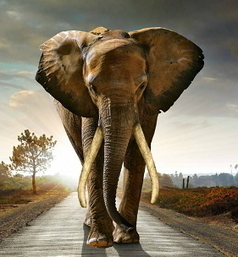 March For Elephants | Saving The Elephant From Extinction | GarryRogers Biosphere News | Scoop.it