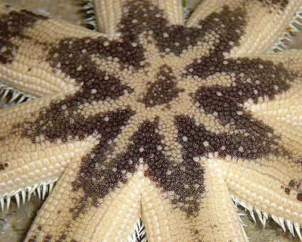 Starfish Macro Shots! Up Close Tropical Edition! | Amocean OceanScoops | Scoop.it