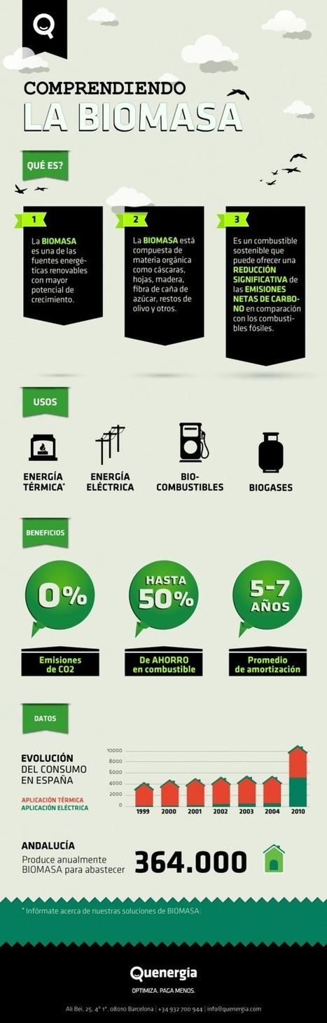 diarioseconomicos: Comprendiendo la biomasa | Biomasa y desarrollo económico | Scoop.it