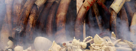 Stop Wildlife Crime   Pages   WWF   Cool Science News   Scoop.it