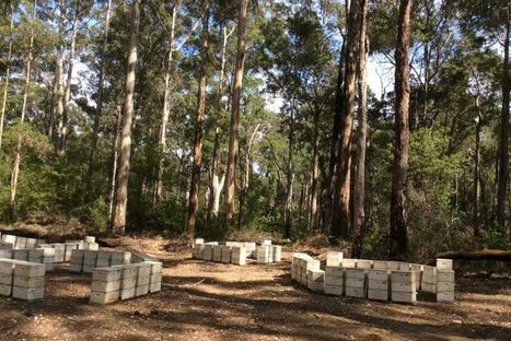 WA beekeepers rejoice in full karri forest bloom | Australian Plants on the Web | Scoop.it