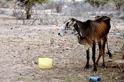 Kenya : la sécheresse menace 1,3 million de personnes d'insécurité alimentaire | Confidences Canopéennes | Scoop.it