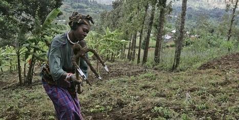 Uncertainties surround farming reform in Tanzania | FANRPAN | Scoop.it