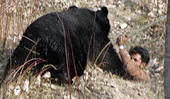 Bears Rampage Through Kashmir Villages, Injure Four - freepresskashmir | Pakistan Needs More Trees | Scoop.it