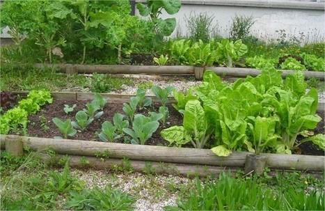 9 consejos prácticos para comenzar una pequeña plantación en casa   Agricultura   Scoop.it