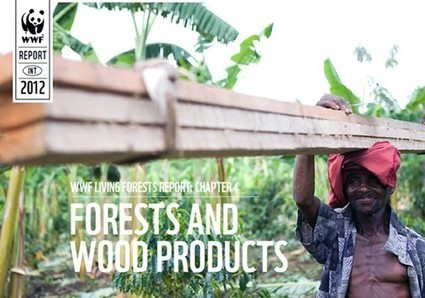 Ecosystems at Risk as Demand for Wood Products Soars Worldwide | EcoWatch | Scoop.it